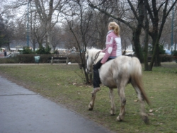 girl riding a white horse without a saddle in downtown - even more random sight