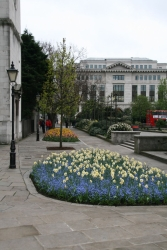 clean and flowery London - very springish