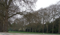 Hyde park in early spring - ridiculously fresh