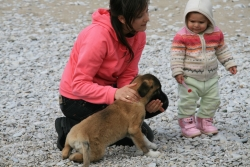 this little girl refused to adopt Toros no matter how hard he tried to charm her
