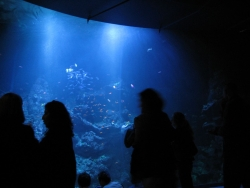 the acquarium exhibit