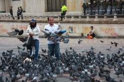...thousands of pigeons (who we can only assume will riot soon given the police in the back)...