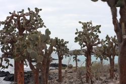 day 3 starts off with a stroll through the giant cactus forest