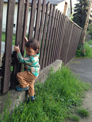 110 - I fearlessly climbed up and down the fence.jpg